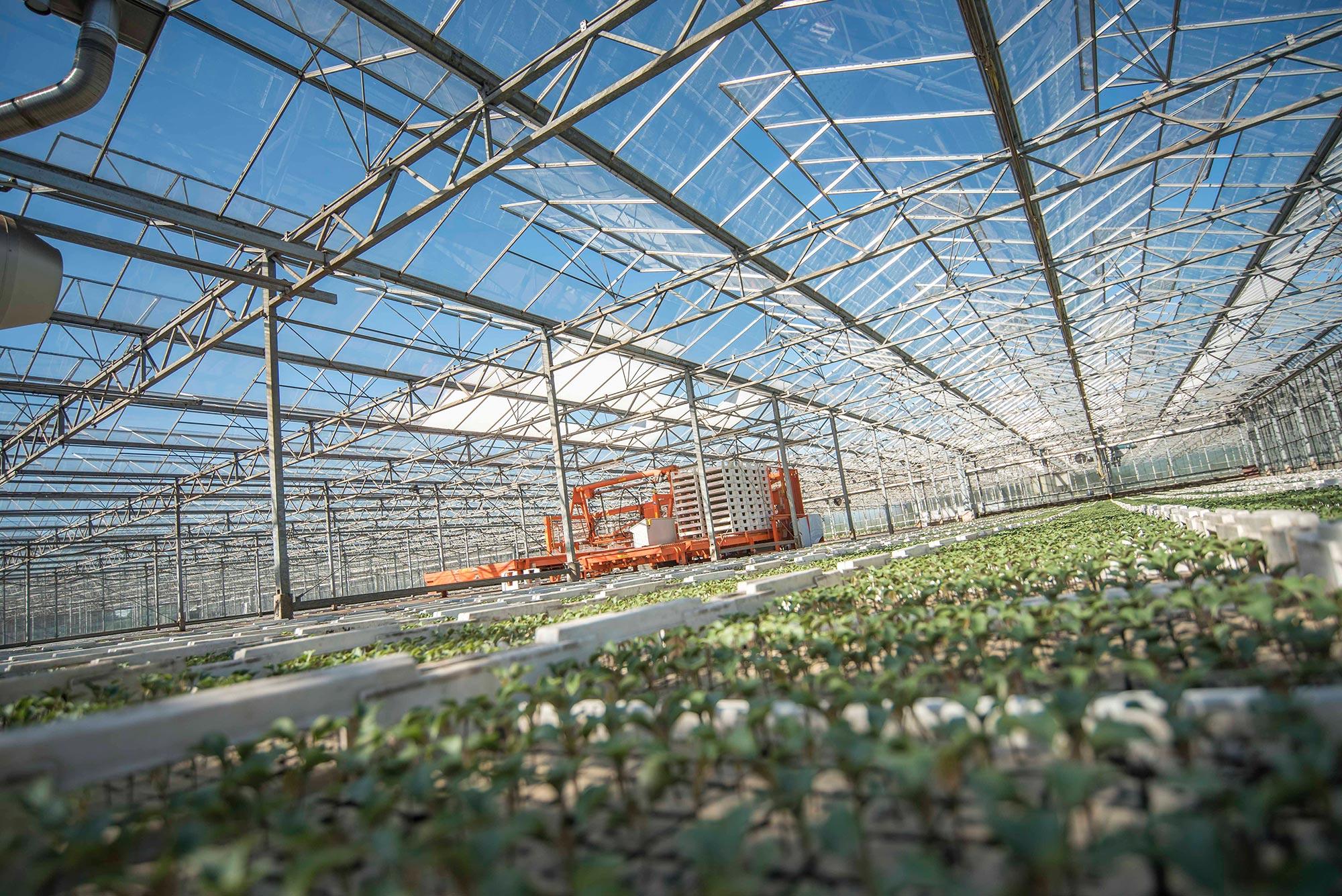 Lüske Jungpflanzen - Gewächshaus