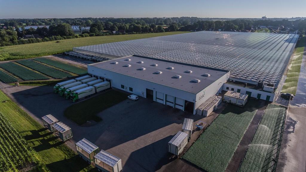 Jungpflanzen Lüske - Gewächshäuser und Logistikzentrum